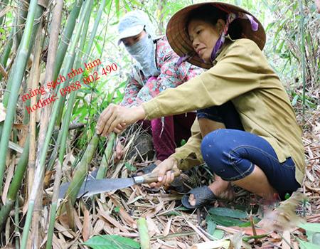 măng nứa khô - cách làm măng khô từ măng tươi (tự nhiên)